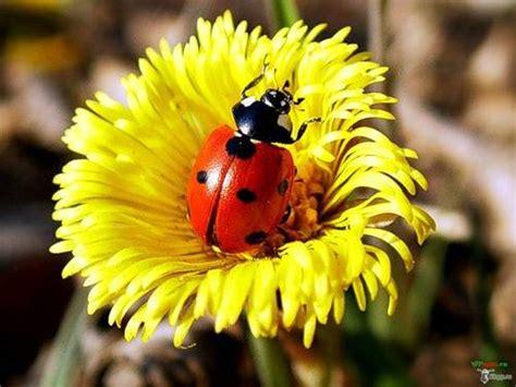 foto porta fortuna foto porta fortuna dall album fiori di markizaita su