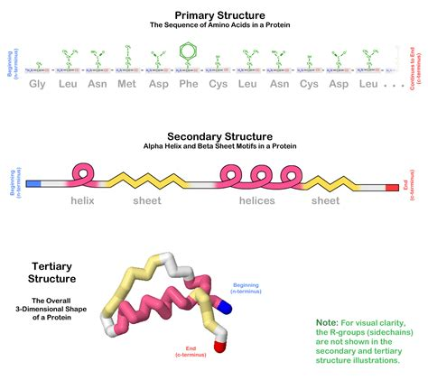 protein tertiary structure tertiary structure protein structure tutorials msoe