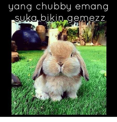 Chubby Meme - 25 best memes about chubby chubby memes