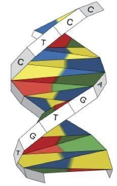 3d Dna Origami - best 25 dna lab ideas on 3d dna model