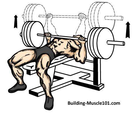 description of bench press the bench press exercise
