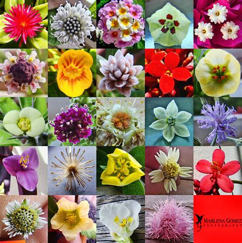 pictures of flowers and their meanings search results