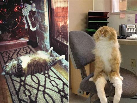 Cat Furniture 6 Two Very Funny Situations With A Cat That S Sleeping