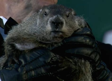 groundhog day toronto zoo winnipeg willow canadian groundhog has died uinterview