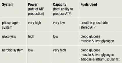 creatine 800m energy systems