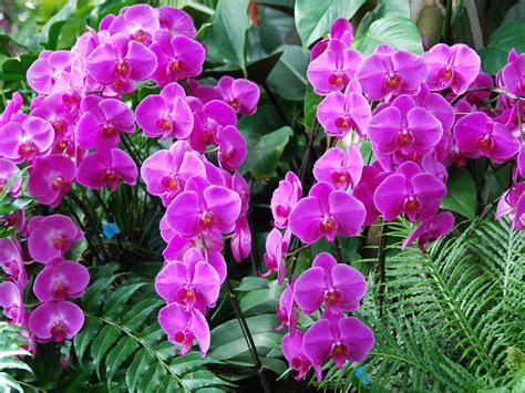 imagenes de rosas orquideas flores orquideas imagui