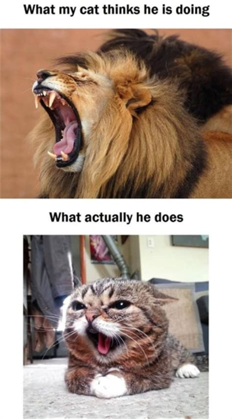 Funny Angry Cat Meme - angry cat funny pictures