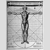 Vitruvian Man By Leonardo Da Vinci | 200 x 270 jpeg 27kB