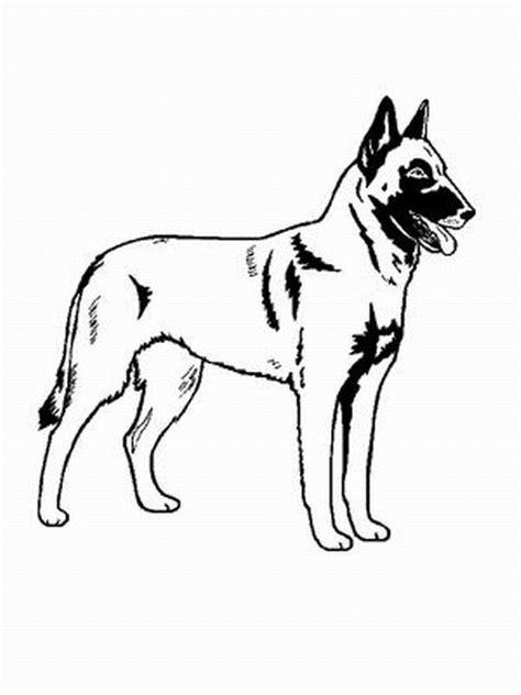 hund beglian malinois ausmalbild malvorlage hund