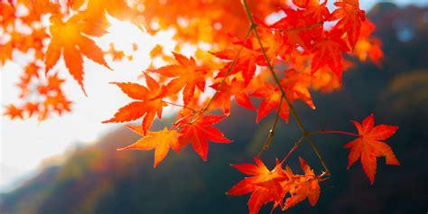 fall foliage map  autumn foliage map