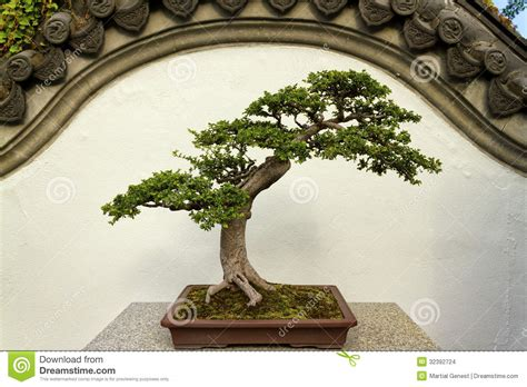 Garden Accessories From China Bonsai Stock Images Image 32392724