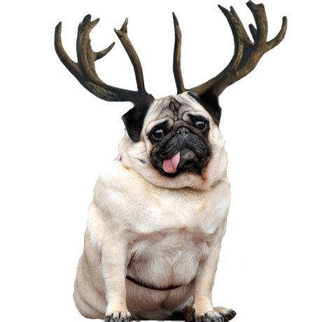 pug reindeer pin santa pug on