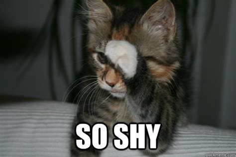 Shy Meme - so shy cat memes quickmeme