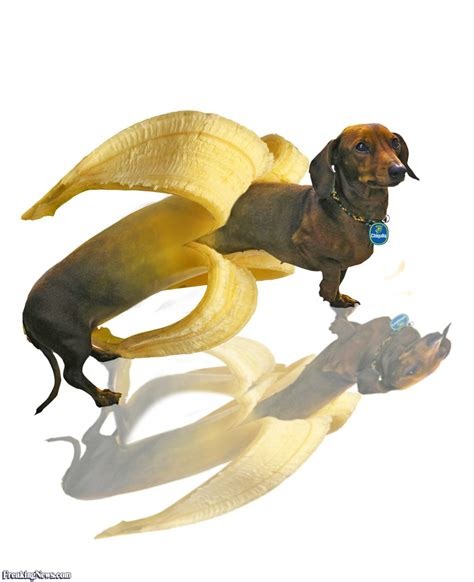 dogs and bananas banana pictures