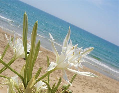 lido fiori di menfi giglio marino a lido fiori viaggi vacanze e turismo
