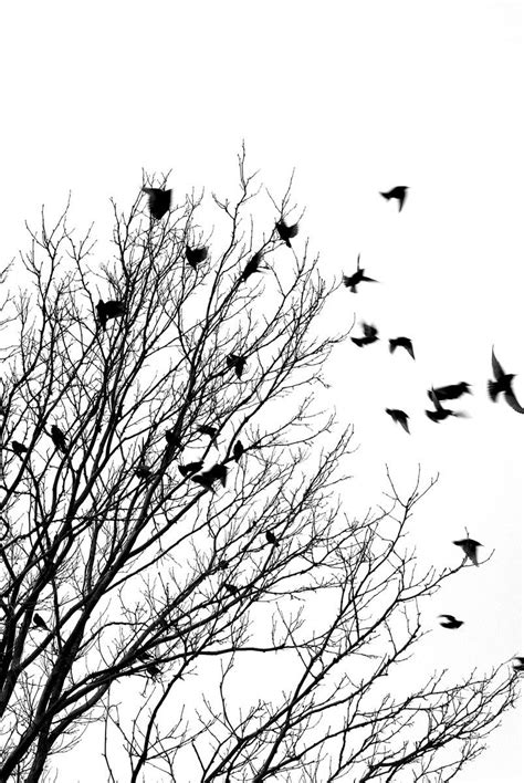 black and white wallpaper with birds black and white bird wallpapers 43 wallpapers adorable