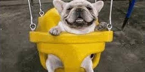 dogs like dogs acting like humans huffpost uk
