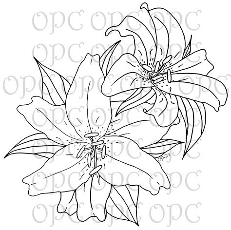 free coloring pages of lily drawing