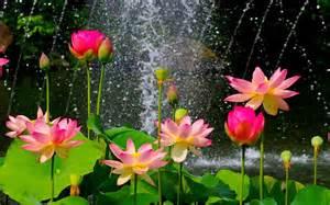 fleur nature jardin sauvage hd papier peint de bureau