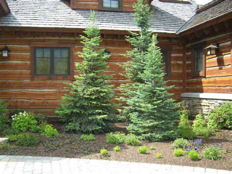 Landscaping Ideas Evergreen Shrubs Outdoor Plan Idea Front Lawn Landscaping Ideas Pine