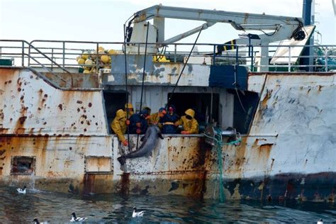 nz made fishing boats a voice for the voiceless january 2015