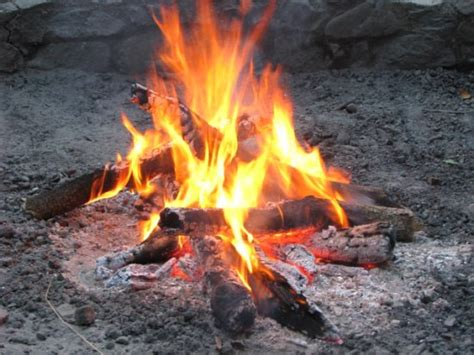Best Firewood To Burn In A Fireplace by Oklahoma Farm Report State Ag Department Says Don T Move