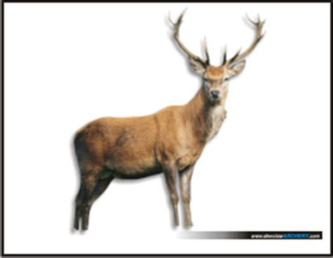 printable deer shooting targets printable deer target ideas for the kid pinterest
