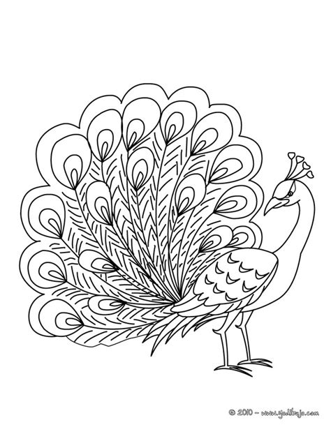 pavo real para pintar imagenes para pintar dibujos para colorear de animales pavo real dibujos