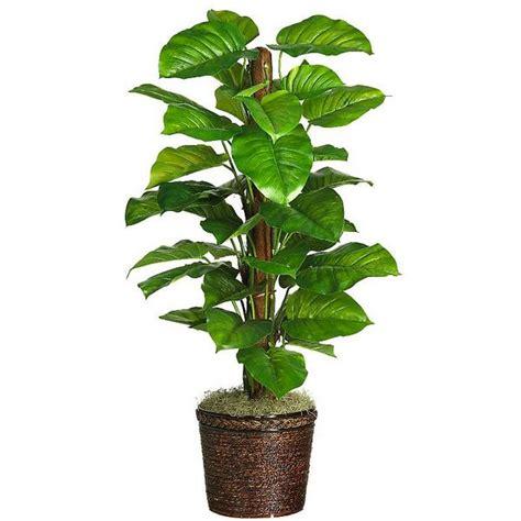 indoor plants images plants rugzoom