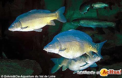 aquarium du val de loi sequa