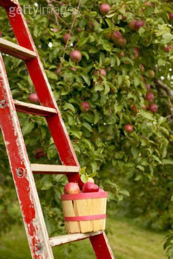 big red bath orchard b00c7crpd4 174 best images about ladders who knew what to do on inspirational vintage and