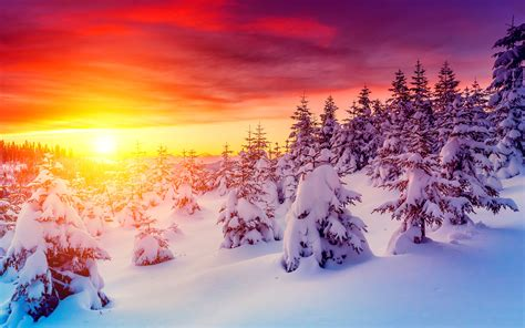 seasons winter sunrises  sunsets sky fir snow nature