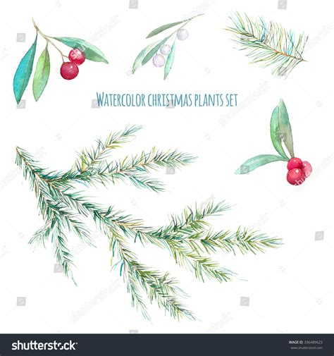 watercolor christmas plants set hand drawn holly branch