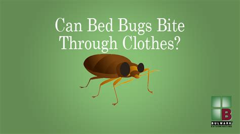 can bed bugs bite through clothes bed bug on clothes