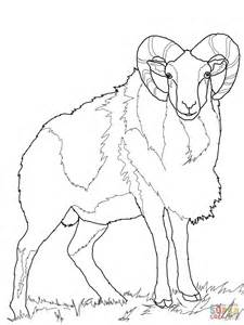 mountain sheep coloring page wild sheep mouflon coloring page free printable coloring