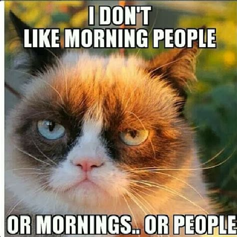 Not A Morning Person Meme - be still a minute my friend grumpy cat