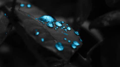 wallpaper black leaf wallpaper blue drops in a black leaf 1920 x 1080 full hd