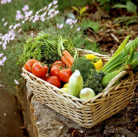organic gardening the home garden organic gardening the home garden