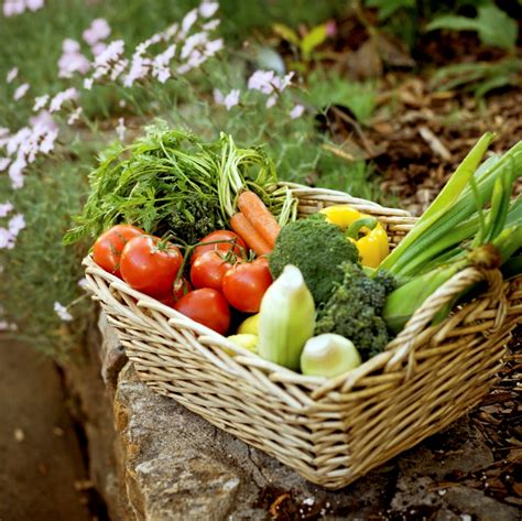 Organic Gardening   The Home Garden