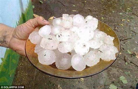 hail definition of hail by the free dictionary hail stone storm in spain killed sheep and wrecked cars
