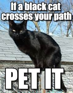 Black Cat Memes - friday the 13th cat meme www pixshark com images