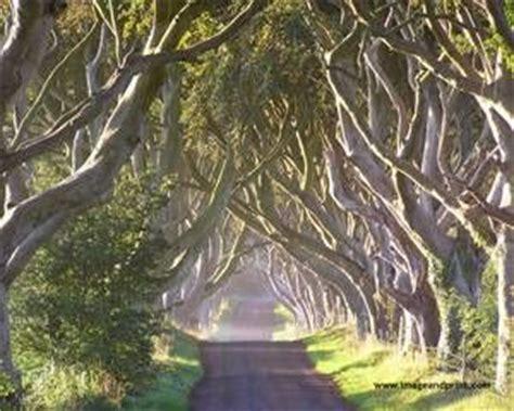 wedding arch northern ireland the hedges county antrim northern ireland the