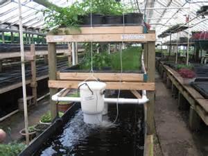 Backyard Aquaponics Greenhouse by Garden Circkles Fish Farming Tilapia And Backyard