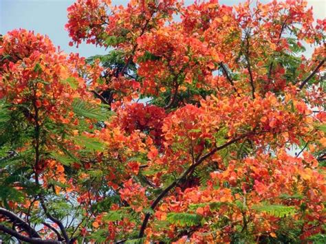 All Year Flowering Shrubs - flowering trees in north florida pictures reference