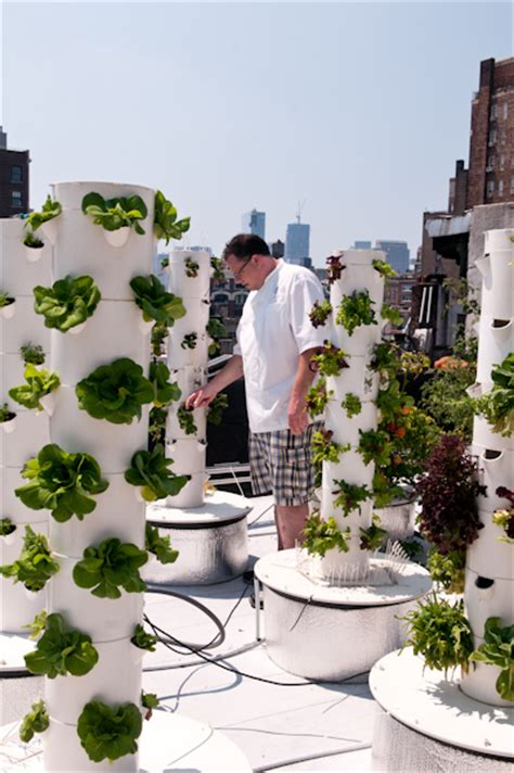 Bell Book And Candle Restaurant Rooftop Garden by Chef Mooney Of Bell Book Candle New York Ny