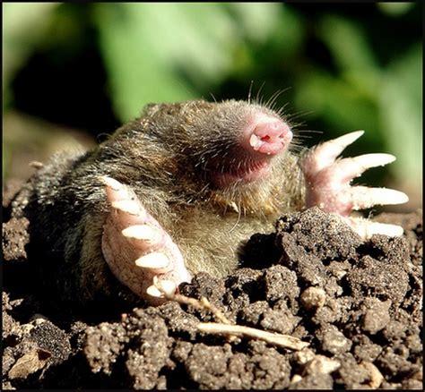 come allontanare i topi dal giardino le bottiglie di plastica allontanano le talpe dal giardino