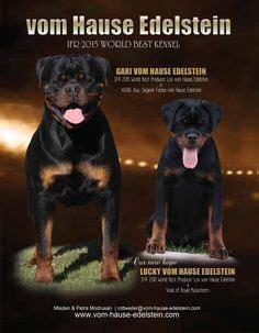 world best rottweiler kennel multi v1 multi bob ch of serbia ellyl black allusion ipo 1 bh hd a ed 0 dna