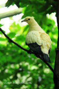 V1olet my favorite things jurong bird park south east asia birds