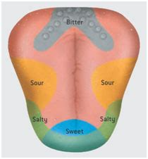 tongue taste sections 18 random facts i didn t know that i didn t know