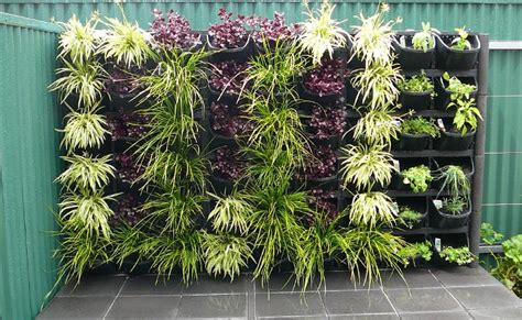 vertical gardens adelaide feature walls for small gardens